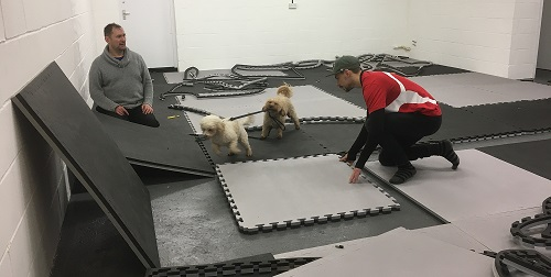 New mats have a arrived with doggy helpers